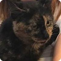 Adopt A Pet :: Shelby - Eureka, CA