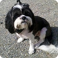 Adopt A Pet :: Cloy - Seattle, WA