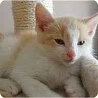 Adopt A Pet :: Squishy - Port Republic, MD