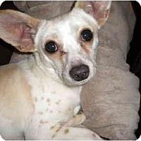 Adopt A Pet :: Speckles - Braintree, MA