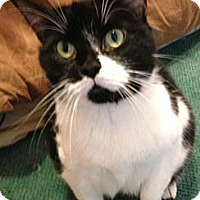 Adopt A Pet :: Stella - Chicago, IL