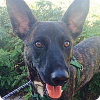 Adopt A Pet :: TIGER - Irvine, CA