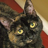 Adopt A Pet :: Maleficent - Morgan Hill, CA