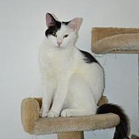 Adopt A Pet :: Merlin - Ventura, CA
