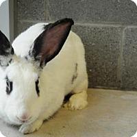 Adopt A Pet :: Petunia - Hamilton, ON