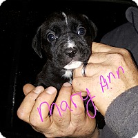 Adopt A Pet :: Mary Ann - Sussex, NJ