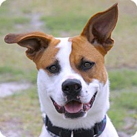 Adopt A Pet :: Tony - Loxahatchee, FL