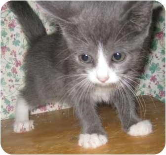 cat sanctuary jacksonville fl