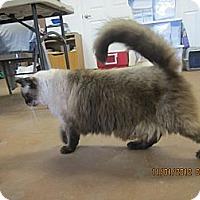 Adopt A Pet :: Handsome - Bunnell, FL