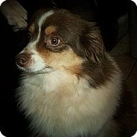 Adopt A Pet :: Ginger - Abilene, TX