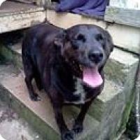 Adopt A Pet :: Bailey-Assisted Living 4 Owner - Dundas, VA