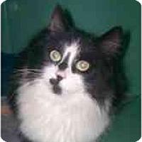 Adopt A Pet :: Stella - Markham, ON