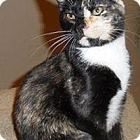 Adopt A Pet :: Myah - Chandler, AZ