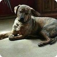 Adopt A Pet :: Mandy - Morgantown, WV