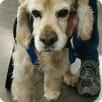 Adopt A Pet :: Reggie - Sacramento, CA