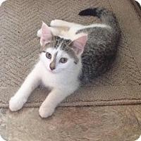 Adopt A Pet :: Lila 1 - Plainville, MA