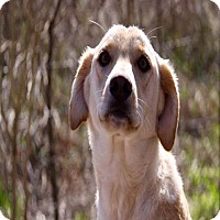 Adopt A Pet :: Katie pending adoption - Manchester, CT