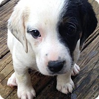 Adopt A Pet :: Lilith - Allentown, PA