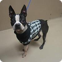Adopt A Pet :: DJ - Reno, NV