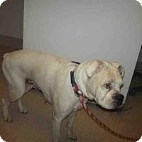 Adopt A Pet :: RILEY - Bakersfield, CA