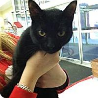 Adopt A Pet :: Eclipse - Riverhead, NY
