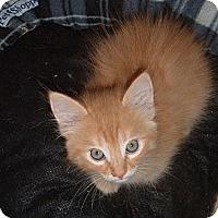 Adopt A Pet :: Billy Bob - Acworth, GA