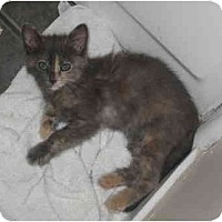 Adopt A Pet :: Dulce - Davis, CA
