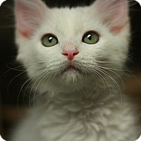 Adopt A Pet :: Heavenly - Canoga Park, CA