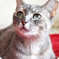 Adopt A Pet :: Kimba - Xenia, OH