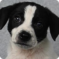 Adopt A Pet :: Aspen - Minneapolis, MN