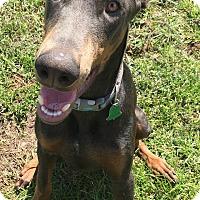 Adopt A Pet :: Jax - Crystal River, FL