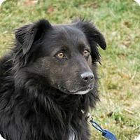Adopt A Pet :: Spot - Meridian, ID