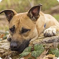 Adopt A Pet :: Feather - Port Washington, NY