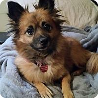 Adopt A Pet :: Wanda West - Urbana, OH