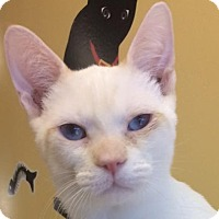 Adopt A Pet :: Miller - Auburn, CA
