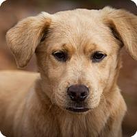 Adopt A Pet :: Rowdy ~ ADOPTED! - Saratoga Springs, NY