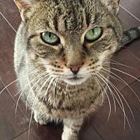 Adopt A Pet :: Roxanne - Hamilton., ON