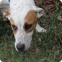 Adopt A Pet :: McGraw - Sanford, FL