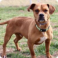 Adopt A Pet :: Uggs - Waldorf, MD