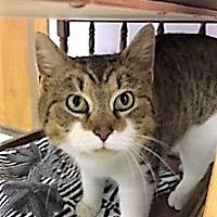 Adopt A Pet :: Bunny - Medina, OH