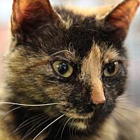 Adopt A Pet :: Koko - Bronx, NY