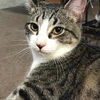 Adopt A Pet :: Ash - Yuba City, CA