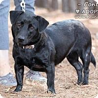 Adopt A Pet :: Contessa - Minneola, FL