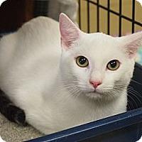 Adopt A Pet :: Austin - Ocean City, NJ