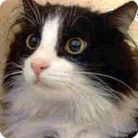 Adopt A Pet :: Jacqie O - Escondido, CA