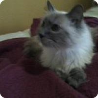 Adopt A Pet :: George - Palmdale, CA