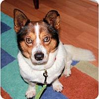 Adopt A Pet :: Teddy - Murfreesboro, TN