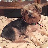 Adopt A Pet :: Stevie - Canton, IL