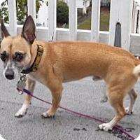 Adopt A Pet :: Luke - Medford, MA