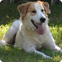 Adopt A Pet :: TX/Samantha (Adoption Pending) - St. Louis, MO